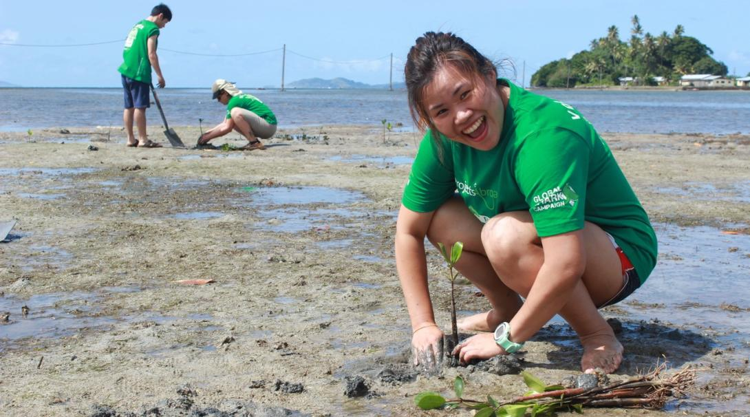 Projects Abroad volunteers replanting mangroves on their Fiji Marine Conservation Project